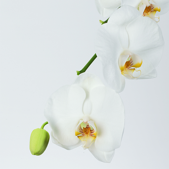 Orchid_002