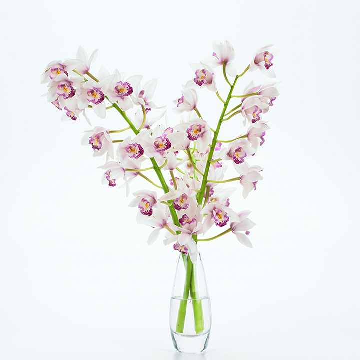 Orchid_lg_007
